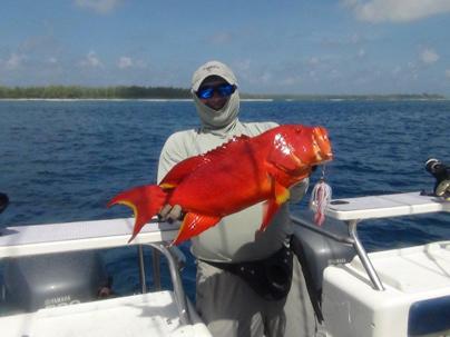 Красный лирохвостый группер. Очень вкусная рыба!