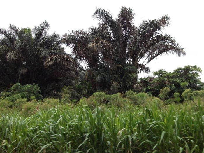Флора Южной Америки