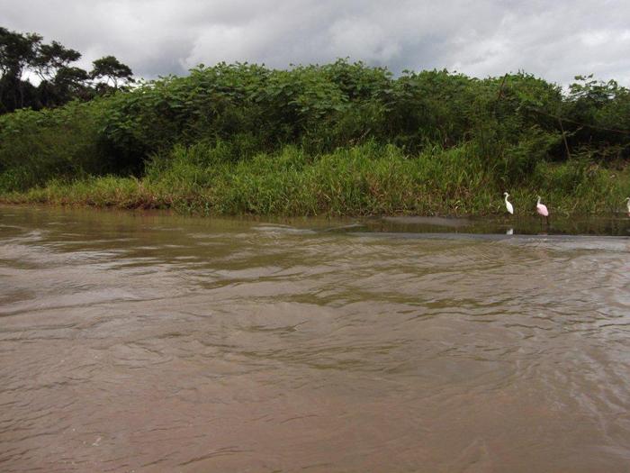 Фауна Южной Америки